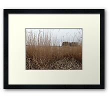 Dry reeds in the wind  Framed Print