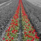 2lips, 2 Rows by Fred Seghetti
