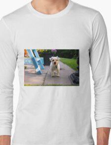 cute little dog Long Sleeve T-Shirt