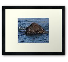 Bison Crossing Framed Print