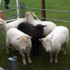 Black sheep of the Family! by waldie