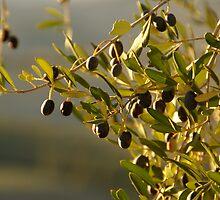 Olives by Sturmlechner