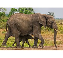 Elephants - Baby with Mother Photographic Print