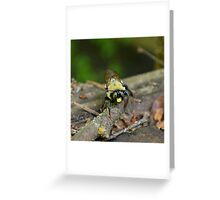 "Would you ""bee"" my friend? Greeting Card"