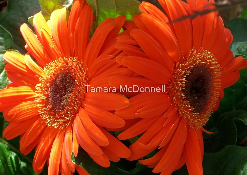 Mandarine Mirage by Tamara Lindsey