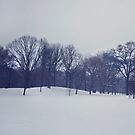 Snow in Prospect Park by Kameron Walsh