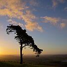 Lone wind shaped tree by peteton