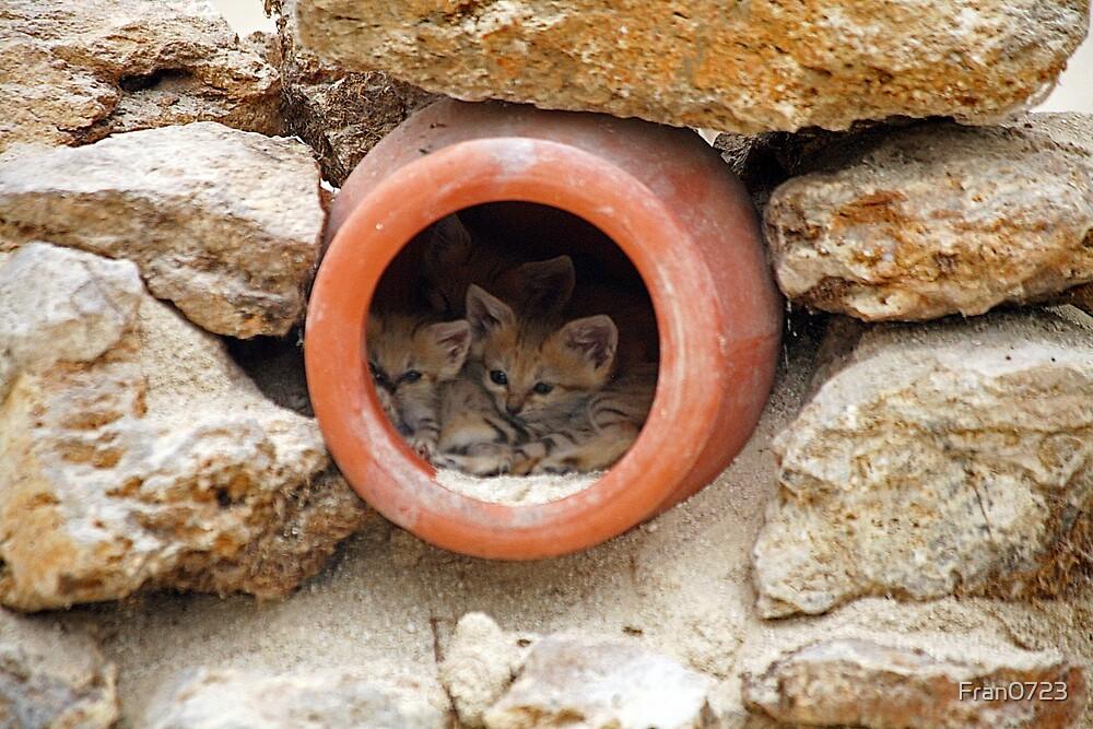 Sand kitties by Fran0723