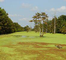 Algae On Crooked Creek by WildestArt