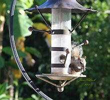 Squirrel On Backyard Bird Feeder by June Holbrook