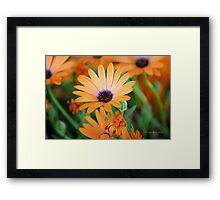 Orange Perfection Framed Print