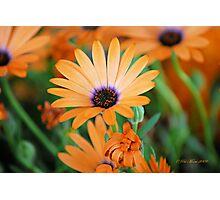 Orange Perfection Photographic Print