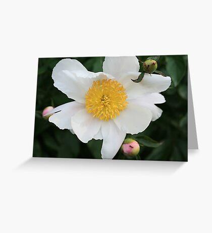 Single White Peony Greeting Card