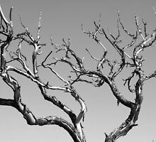 Abstract Tree by Bo Insogna