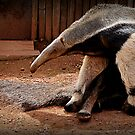 Giant Anteater by Ladymoose