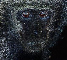 Monkey Monkey. by Gerry Pearce