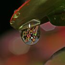 Droplet by Rick Fin