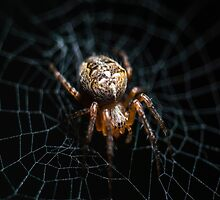 Spider on the Web  by Factory23