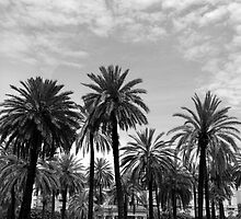 Palm Tree View by KLogan0001