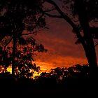Sunset through the Trees by Vickie Burt