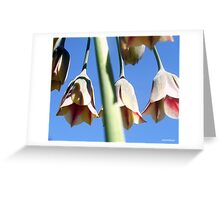 The Bells Are Ringing............... Greeting Card