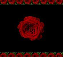 Rose in bloom on black by rom01