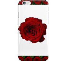 Rose in bloom on white iPhone Case/Skin