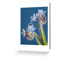 Forget me Knots Greeting Card