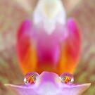 Twin droplets by Melinda Gaal