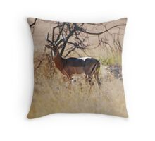 In The Dry Heat Throw Pillow