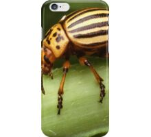 Random Insect