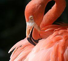 Pink Beauty by Cheri Bouvier-Johnson