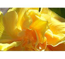 Lemon Dream Photographic Print