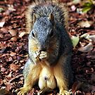 Packin Nuts by © Loree McComb