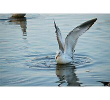 Seagull | Center Moriches, New York  Photographic Print