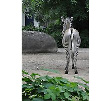 Kiss My Stripes Photographic Print