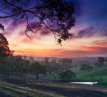 McLaren Vale, South Australia by Oliver Koch