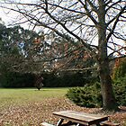 Winter Picnic, Mount Lofty Botanic Gardens by Leigh Penfold