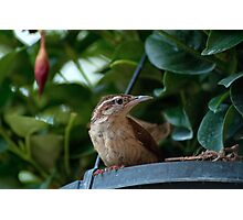 Mrs. Wren finds a Home Photographic Print