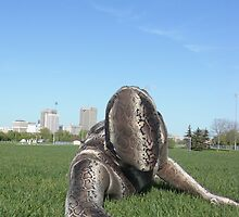 Sssssnake in the Grass 1 by mdkgraphics