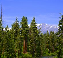 Alpine Wilderness Area by Debbie Roelle