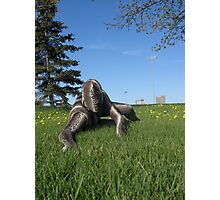 Sssssnake in the Grass 10 Photographic Print