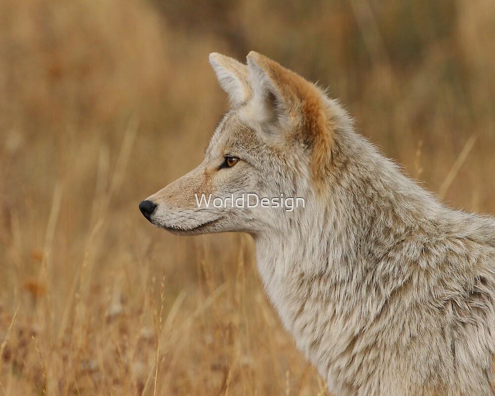 Coyote Profile by William C. Gladish, World Design