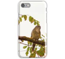 Autumn Visitors at 'Arilka!'   Red Rumped Parrots.  iPhone Case/Skin