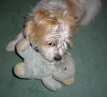 Now if I can just get its nose!  Skye with teddy by Songwriter