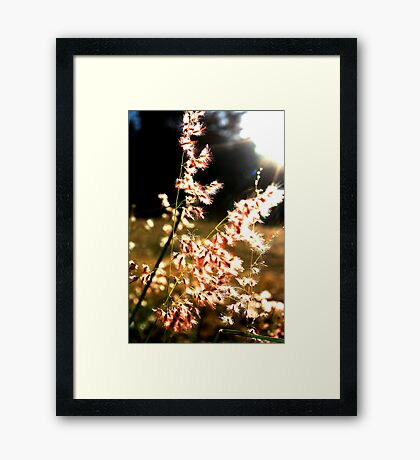 Pink and soft, light and free Framed Print