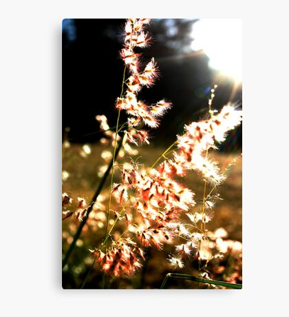 Pink and soft, light and free Canvas Print