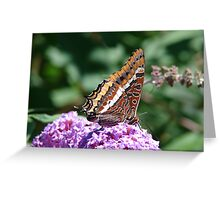 Two Tailed Pasha Greeting Card