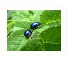 Blue Beetles Art Print