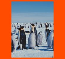 Young Emperor Penguin